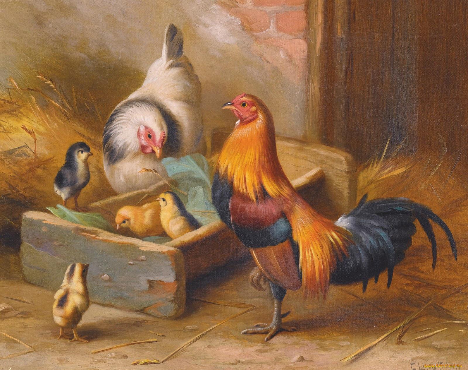 Картинки семья петушка